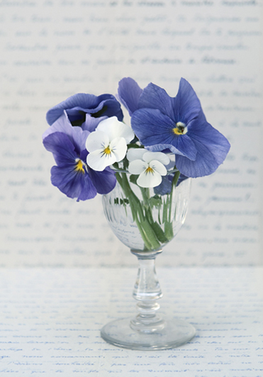 cover_violets_flowers_letters