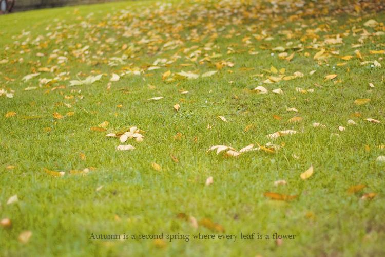 autumn_leaves_albert-camus