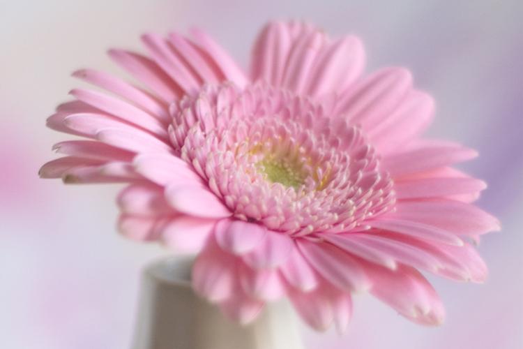 cover-flower