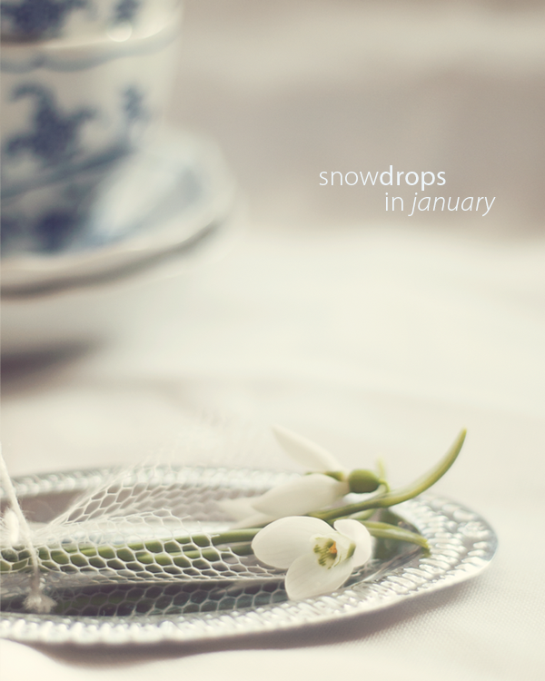 cover-snowdrops-in-january