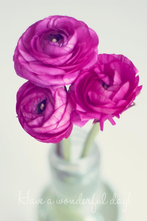 flowers-close-up-blossom