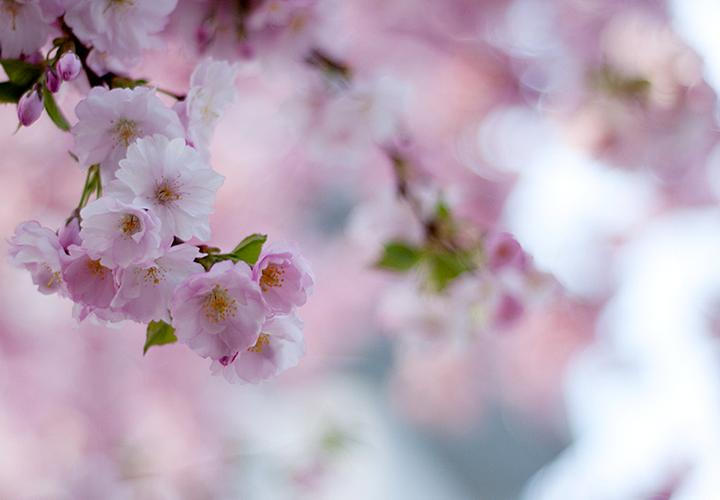 pink-bloom-again