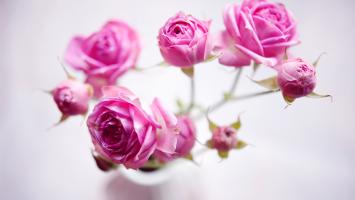 79ideas-small-cute-roses