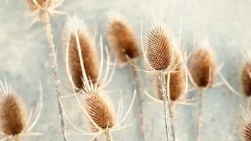79ideas-winter-photography-Carl-Christense