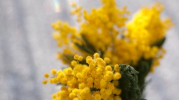 79ideas-yellow-flowers