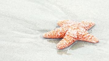 79ideas_sea_star
