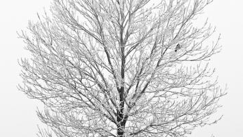 79ideas_white_winter