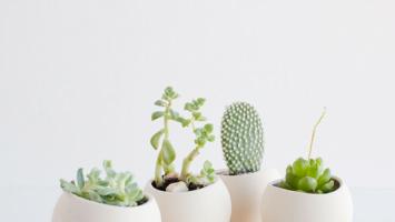 79ideas_cute_ideas_for_small_plants