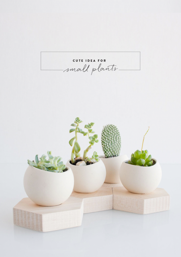 79ideas_cute_ideas_for_small_plants