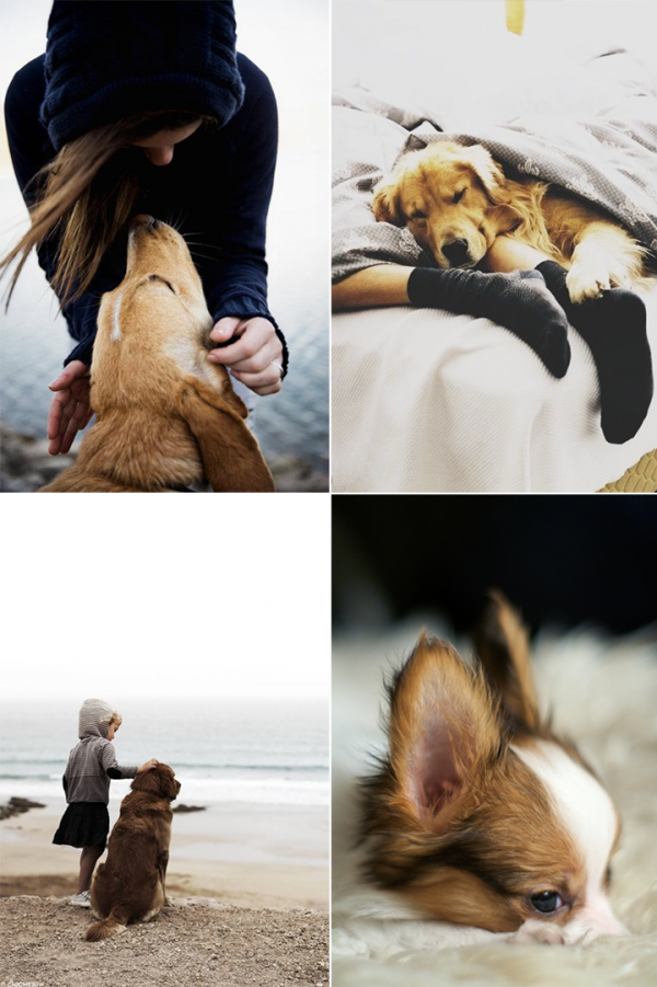 79ideas_dog_love