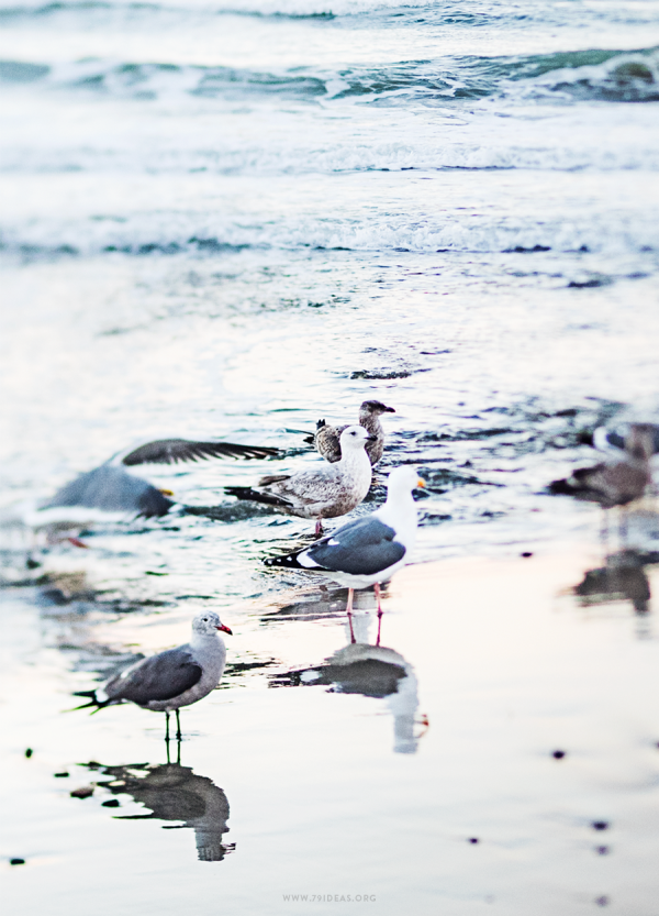 79ideas_birds_pacifica_state_beach